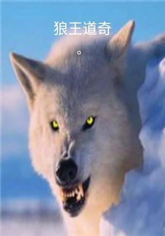 狼王道奇封面